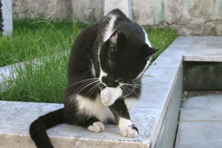 Cats, Recoleta Cemtery