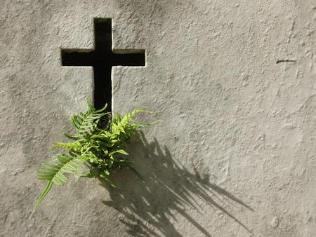 Fern growing from cross, Recoleta Cemetery