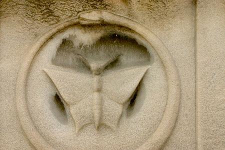 Moth, Recoleta Cemetery