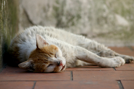 Relaxing cat, Recoleta Cemetery
