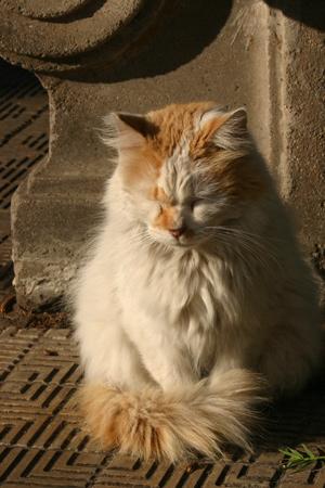 Cats, Recoleta Cemetery