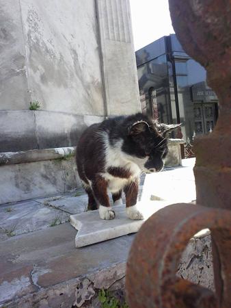 Cat, Recoleta Cemetery