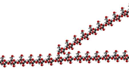 glycogen molecule